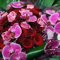 pilion-Roses-and-Orchids